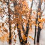 selective-focus-photography-of-dried-leaves-1590549
